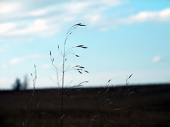 the grass so little has to do (jamelah) Tags: grass rural blahblah emilydickinson ilikegrass nationalpoetrymonth yeahgrass