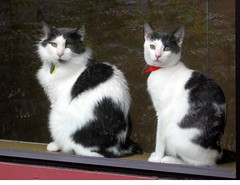 Pair of Tuxedo Cats in a Window at Animal Shelter ~ Reached 25,000 Views! (Pixel Packing Mama) Tags: beautiful pretty lovely1 gorgeous awesome tuxedocats stunning catsandkittensset catscatscats ilovemycat fabulous flickrwow nuggets cutecat artnolimits catskittensset catlovers heartlandhumanesociety petparade beautifulcats apairortwothingsnotpeople catpix meowscollector catssmalltobig dorothydelinaporter canonpowershota510a520 worldsfavorite everybodywantstobeacat notmypet catsandwindows wowphotos melfanclub welovelatte catcentury doublebeauty bonzag favoritedpixset mostinterestingaccordingtoflickralgorithmset 20commentsanduppool greatpixgallery10favespool somebodyelsescatpool tuxedocatspool tuxedokittiespool justmoggiespool cats760viewscatswellontheirwayto1000viewsormorepool reallyunlimitedpool catslookingatyoupool views1000andupdomesticcatsonlypool 1025favouritespool 5000viewsmusthave5000viewspool views7000orfavorites100pool 7500pool favorites15pool uploadedfirsthalfof2006set multiplecatspool over10000viewspool commentedwithwowunlimitedpool aristocatspool 25000viewsset pixelpackingmama~prayforkyronhorman over4620000aggregateviews reflectionsmirrorpixset over430000photostreamviews