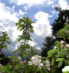 Dark clouds and applebloom (Per Ola Wiberg ~ powi) Tags: nature beautiful clouds ilovenature niceshot sweden may 2006 harmony sverige ohhh hwa maj musictomyeyes naturescenes moln aclass naturegroup fotoclub krsbrsblom eker flickrstars morsdag ppelblom naturesgallery naturewatching ultimategold diamondstars flickrsun exemplaryshotsflickrsbest onlynatureaward justlovelyphotos flickrsheaven flickridol natureslove flickrestrellas crazyaboutnature beautifulshot screamofthephotographer photographersgonewild grouptripod oletusfotos doubledragonawards brilliantphotography naturescreations oohlalapictures artofimages addictedtonature flickrunitedaward naturesribbon bestpeopleschoice fotografaynaturaleza naturegreenstar fotosconelcorazonphotoswiththeheart fotosconelcorazon