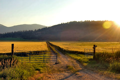 Fields of Gold (lawatha) Tags: sunset field grass golden washington gate hills pacificnorthwest fields wa pnw hilly grassy colville deleteit saveit saveit2 deleteit2 saveit3 deleteit3 deleteit4 saveit4 deleteit5 saveit5 deleteit6 deleteit7 deleteit8 saveit6 saveit7 deleteit10 deleteit9 saywa