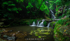 Elabana Falls (C.R Images) Tags: elabana falls south east queensland tropical landscape waterfall outdoor long exposure rock tree moss fern water stream nature australia vivid colorful