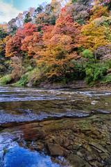 養老渓谷 紅葉 (Mori.Kei) Tags: 養老渓谷 紅葉 川 river autumnleaves autumn valley red yellow blue 反射 reflection リフレクション