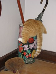 That's My Boy. (andrea z) Tags: umbrella cat stand orangecat pete cattail petesmyhero ccc54 portalquest umbrellastandmonster