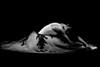 Anonymous ballerina (fd) Tags: ballet dance ballerina lightproofboxcom
