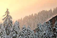 Looking for warmth (Vratsagirl) Tags: trees winter snow topf25 sunrise ilovenature topv333 bravo top20winter 100v10f most bulgaria pines borovets bestofwinter