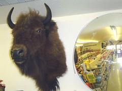 13. buffalo