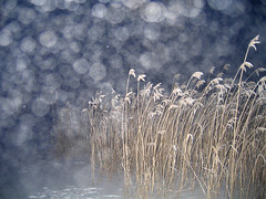 Fog in the air (Vaeltaja) Tags: blue winter snow nature fog night suomi finland reeds bravo flash oulu lumi talvi oneyear salama luonto y kaislat sumu sininen ilikegrass kuivasjrvi anawesomeshot