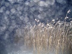 Fog in the air (Vaeltaja) Tags: blue winter snow nature fog night suomi finland reeds bravo flash oulu lumi talvi oneyear salama luonto yö kaislat sumu sininen ilikegrass kuivasjärvi anawesomeshot