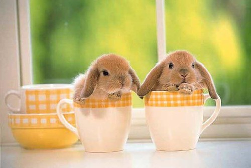 Bunnies In Cups. Aren't these bunnies simply the most adorable creatures