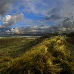 DUNEPATH (ESOX LUCIUS) Tags: sea holland beach dunes taco naturereservedekwadehoek
