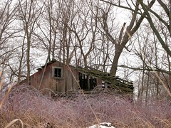 Bramble Bound (wouldpkr) Tags: dixon il rural farm condemned shed barn weatherd wood brambles cold winter snow ruraldecay