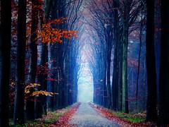 Landscape (soleá) Tags: road autumn trees winter mist holland nature topf25 misty fog topv2222 landscape topf50 topf75 arch colours expo topf300 topf150 leafs topv3333 topv4444 topf100 topf250 topf200 topf400 topf425 topf450 topf500 topf350 topf175 topf225 topf600 topf650 topf575 abigfave topf625 primoamore world100f