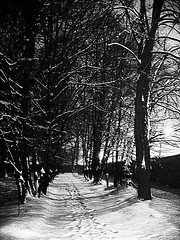 """Ah, distinctly I remember it was in the bleak December"" (maryszka) Tags: bw park trees tree december snow winter cold dark darkness edgaralanpoe theraven dream dreamy nightmare poetry poem quiet night fear spooky creepy fearsome weird empty emptiness path footprints feetprint literature"