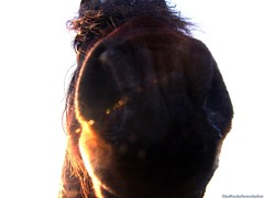 Hello Sailor! series (4) (MadPole) Tags: horses horse caballo cheval ross kali uma sunsets cal ponies ros cavallo cavalo pferd esp mal kin konie each kuda alogo ka horsies hest equus hevonen chevaux paard cavall kon hors sous  rta kone yegua hst  hesp assa   l  morin ko arklys hestur hynder  chaval koniki  perd  eoh  zaldi k caval chelee  ks caballu konj march  kabayo soquili sobah kobila evalo hobu hobune cjaval cabalo  ippos   kavaju  ghod  av  turag hross kavalo capall  kudure ciaval tashunke caballus zirgs k  iemel cahuayo kavale hengest mearh kaviyu grast harmasari grasni load heasta cubaddu acchettu coallu va k  beygir  madpolestream