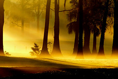 Early Morning Fog (lynne bernay-roman) Tags: trees mist fog alberi forest golden topf50 topv555 bath bravo glow quiet searchthebest quality topv1111 earlymorning 100v10f 500v50f views nebbia 3000 oneyear luce sunbeams f200 oro questfortherest foschia ogm naturesfinest 333views littlestories top20favview mysical mistical bagliore magicdonkey topphoto i500 tronchi outstandingshots gtaggroup interestingness904706 photodotocontest1 goddayw1 exploretop20 cotcmostfavorites abigfave perfectangle artlibre theexhibit flickrplatinum superbmasterpiece diamondclassphotographer flickrdiamond megashot bratanesque theunforgettablepictures closetoreality thegoldenmermaid betterthangood thegardenofzen thesecretlifeoftrees exploreheaven landscapesdreams picswithsoul theexhibitupstairs mastersoflifegallery multimegashot atqueartificia goldenvisions phvalue
