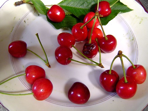The cherries of my garden