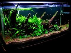 RH Fish Tank