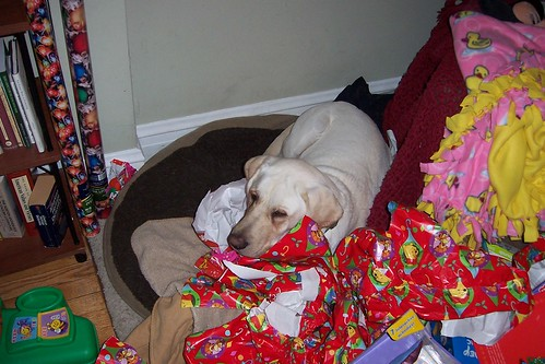 yellow lab - Christmas