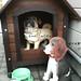ビーグル:犬小屋居住権訴訟
