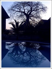 Wet alba luminis (Christine Lebrasseur) Tags: africa travel blue sunset sky france reflection tree art canon landscape hp kenya safari tsavo outdated lodges r707 notpicked interestingness39 fcsetsrises allrightsreservedchristinelebrasseur