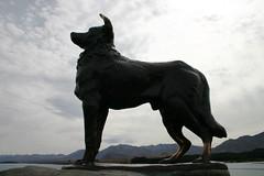 1-1-06 hommage de border collie (schaapshond) (Ans en Bert) Tags: newzealand lake tekapo