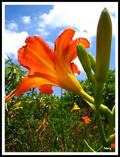 Quinta-Flower!!!