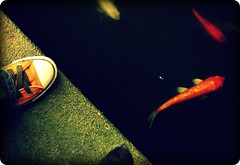 orange chuck and fishes (small wonder) Tags: orange fish shoe koi carp chucks notquite smallwonder slaphappy orangesneaker