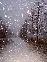 Let it snow (farfuglinn) Tags: trees winter snow topf25 wow iceland interestingness topf50 seasons topc50 interestingness1 fv5 2550fav 500v50f sland mostviewed goldenglobe 1500v40f explore7jan06 i500 flickrplatinum