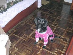 2004-07-20 - Preta 03 (Henrique Oscar Loeffler) Tags: pets preta