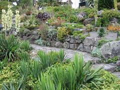 Succulent rock garden (sk8ell) Tags: 2005 travel newzealand gardens flora december nz wellington northisland sedum succulents sempervivum
