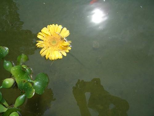 Margarida en un estany que vaig retratar a Girona, a la vora dels Galligants