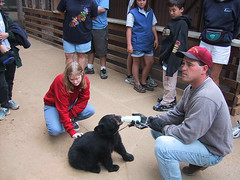 Bandon, OR - Beth petting seven-month old bear being bottle fed at Game Park Safari (hany.com) Tags: bear park old usa pet baby pets black game oregon danger cub us bottle dangerous drink eating beth or bears drinking roadtrip safari eat drinks seven cubs months bandon petting eats fed month feeds handson
