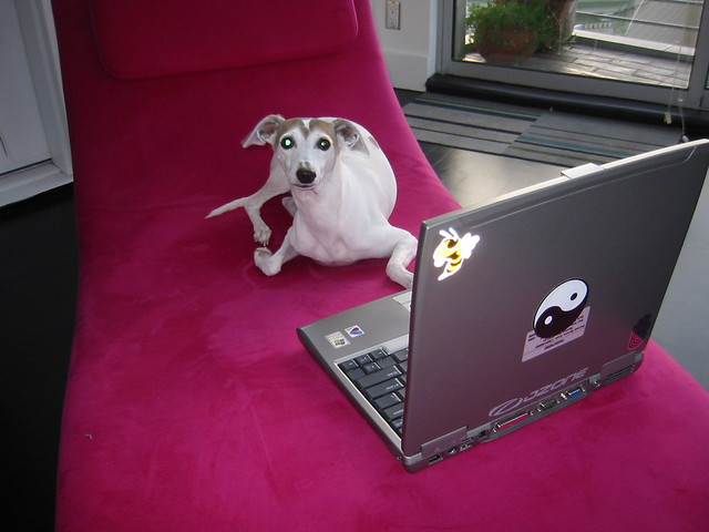 dog using a computer wtf