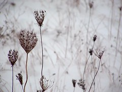 flora_bellezza_invernale (On The Other Side Of The Galaxy) Tags: winter snow fuji praga finepix neve fiori secretgarden s3000 arbusto