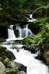 Waterfall, the result... (tollen) Tags: waterfall fingers splashingferns moss rocks trees logs quality green drops ilovenature