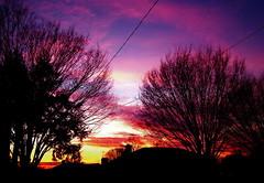 Pink Hue (katmeresin) Tags: trees sunset maryland creativecommons 100views 200views silverspring deleteit mereand saveit saveit2 deleteit2 saveit3 deleteit4 deleteit5 deleteit6 deleteit7 deleteit8 deleteit10 deleteit3forsosidesc deleteit9forclickbeetle katmere