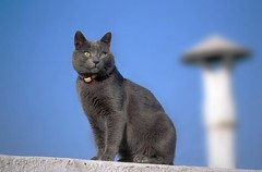 Un gato disimulando su ceguera