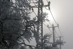 Drty (Jiri Bures) Tags: winter snow tree fog high plum zima strom voltage snh mlha vestka vysok napt