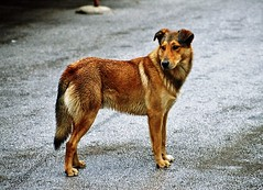 Wild Wet dog - chien mouillé by Méchant connard [tendre est la nuit]