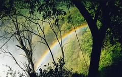 [フリー画像] [自然風景] [虹の風景] [森林/山林] [緑色/グリーン]       [フリー素材]