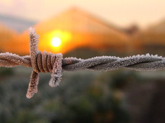 barbed frost (hans solcer) Tags: sun mrjackfrost frost top20sunrisesunset top20hallfame top20sunrisesunsetpix splendiferous