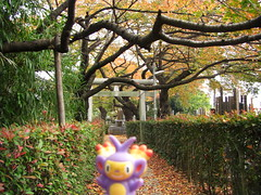 Ambipom in Kasukabe, Saitama 1 (Kasadera) Tags: toys figure pokemon pokmon  kasukabe   pokemonkids  ambipom     ambidiffel capidextre