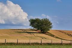 Baum am Horizont (MKallweit) Tags: de deutschland landschaft schleswigholstein herkunft xt1 xf90 felderundwiesen klempau rundumberkenthin