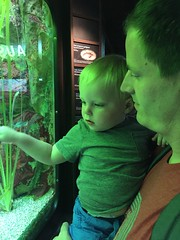 "Paul with Daddy at Shedd Aquarium • <a style=""font-size:0.8em;"" href=""http://www.flickr.com/photos/109120354@N07/19377320403/"" target=""_blank"">View on Flickr</a>"