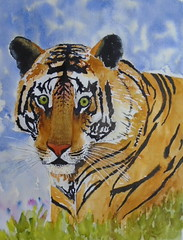 Tiger, by Yone - DSC00269 (Dona Mincia) Tags: life art beauty animal watercolor painting paper feline arte tiger study vida felino tigre pintura fera aquarela
