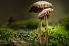 Mushroom (HikerandBiker) Tags: decembre dezember focusstacking forest ilce7 macro makro mushroom pilz sony sonya7 sonyalpha7 sonyfe90mmf28macrogoss wald winter