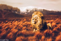 """A lion (gusdiaz) Tags: photoshop photomanipulation digital art arte africa lion foliage bokeh artisitico leon nature naturaleza"