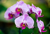 Pretty in Purple (rg69olds) Tags: 12262016 50mm 6d canondigitalcamera lauritzengardens nebraska sigma50mmf14artdghsm canon canoneos6d flowers omaha plants sigma sigma50mmf14 purple orchid indoor greenhouse 50mmf14dghsm a