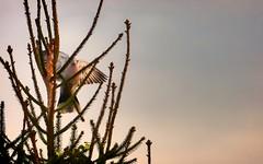 douceur (Yasmine Hens) Tags: pigeon bird hensyasmine namur belgium wallonie europa aaa بلجيكا belgique bélgica ベルギー белгия բելգիա belgio 벨기에 belgia бельгия 比利时 bel be