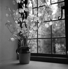 Ely #2 - 2016 (Andrew Bartram (WarboysSnapper)) Tags: rollfilm rollieflex tlr stilllife window light panes house cromwell ely cambridgeshire ilfordphoto fp4 ddx14 film filmisnotdead believeinfilm emulsivefilm